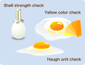 Shell strength check  Yellow color check   Haugh unit check