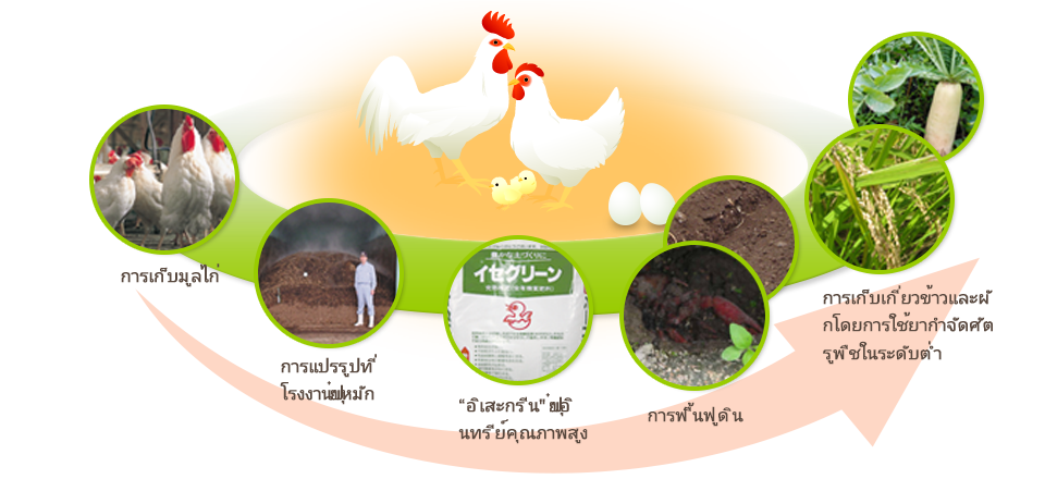 "Collection of chicken droppings, Processed at compost plants, ""ISE Green,"" a high-quality organic fertilizer, Soil regeneration, Low-pesticide cultivation of rice and vegetables"